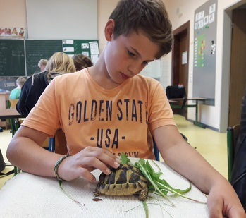 schildkröten steckbrief für kinder