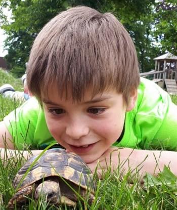 Schildkröten sind faszinierende Tiere.